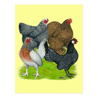 Cuarteto pequeno de la gallina postales