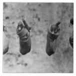 Cuatro anadones uno-día-viejos fijados fuera del d azulejo cuadrado grande