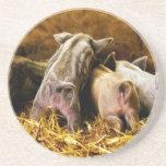 Cuatro cerdos de Mangalitsa del cochinillo del beb Posavasos Manualidades
