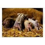 Cuatro cerdos de Mangalitsa del cochinillo del beb Tarjeton