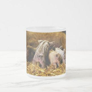 Cuatro cerdos de Mangalitsa del cochinillo del beb Taza