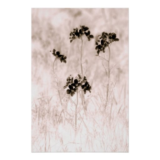Cuatro flores póster