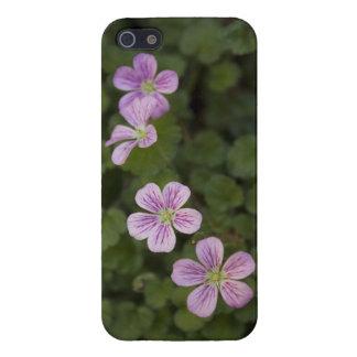 Cuatro flores rosadas iPhone 5 cárcasas