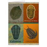 Cuatro fósil Trilobites Felicitacion