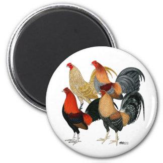 Cuatro gallos de pelea imán redondo 5 cm