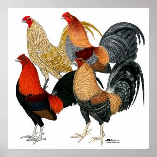 Cuatro gallos de pelea impresiones