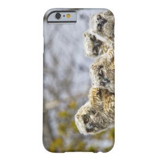 Cuatro grandes polluelos del búho de cuernos funda de iPhone 6 barely there