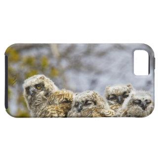 Cuatro grandes polluelos del búho de cuernos iPhone 5 carcasas