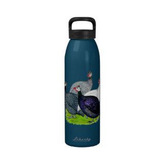 Cuatro Guinea Botellas De Agua Reutilizables