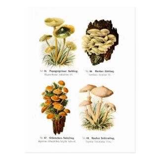Cuatro hongos tarjetas postales