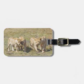 Cuatro leonas etiquetas para maletas