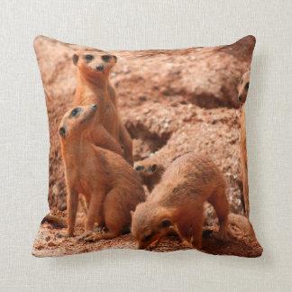 cuatro meerkats que miran alrededor de lindo cojines