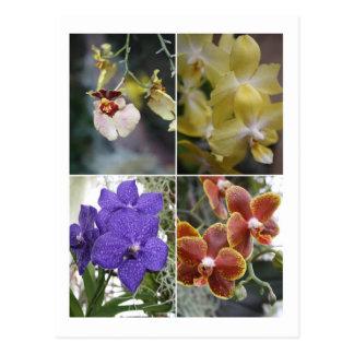 Cuatro orquídeas postal