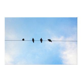 Cuatro pájaros en un alambre impresión en lona