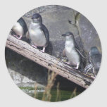Cuatro pequeños pingüinos etiqueta redonda