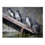 Cuatro pequeños pingüinos tarjetas postales