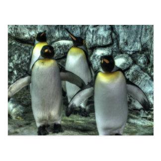 Cuatro pingüinos postal