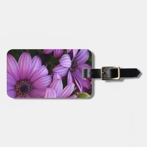 Cuatro rayaron margaritas púrpuras etiqueta de maleta