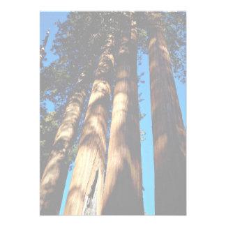 Cuatro secoyas parque nacional de secoya Califor Anuncio Personalizado