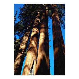Cuatro secoyas parque nacional de secoya Califor Comunicados