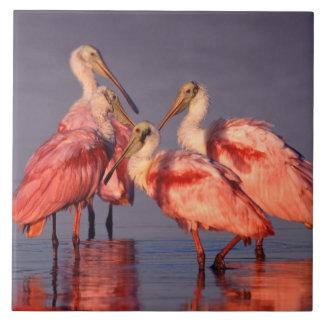 Cuatro Spoonbills rosados (ajaja del Ajaia) en el  Azulejo Cuadrado Grande