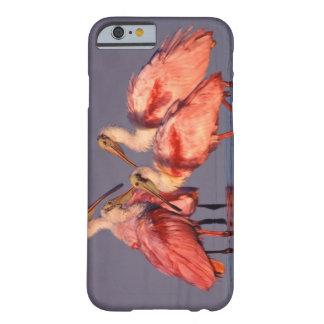 Cuatro Spoonbills rosados (ajaja del Ajaia) en el Funda De iPhone 6 Barely There