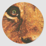 Cub-Arco iris del león en ojo Etiquetas Redondas