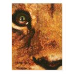Cub-Arco iris del león en ojo Tarjeta Postal