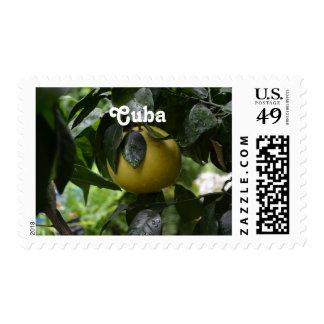 Cuba Grapefruit Postage Stamp