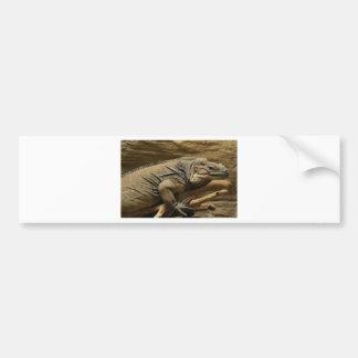 Cuban Iguana Car Bumper Sticker