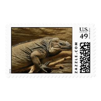 Cuban Iguana Stamps