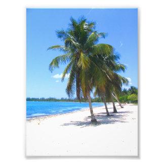 Cuban Palm Trees Photo