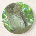 Cuban_Pygmy-owl Beverage Coaster