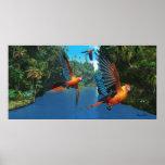 Cuban Red Macaw 2 Print