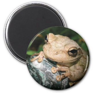 Cuban Tree Frog 2 Inch Round Magnet