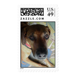 cubby postage stamp