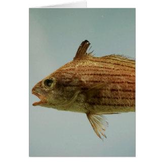 Cubbyu Fish Greeting Card