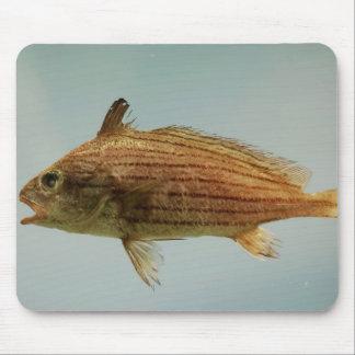 Cubbyu Fish Mouse Pad