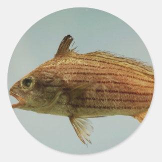 Cubbyu Fish Classic Round Sticker