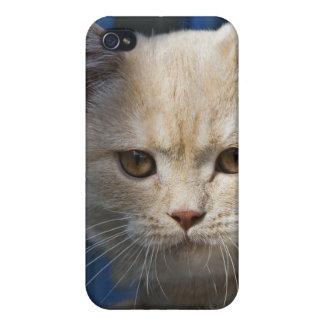 Cubierta británica rubia del gato iPhone4 de Short iPhone 4/4S Fundas