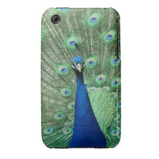Cubierta de Iphone del pavo real iPhone 3 Case-Mate Cobertura
