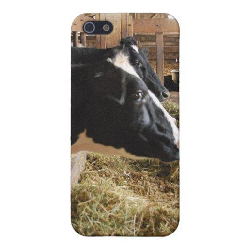 Cubierta de la vaca iPhone 5 carcasas