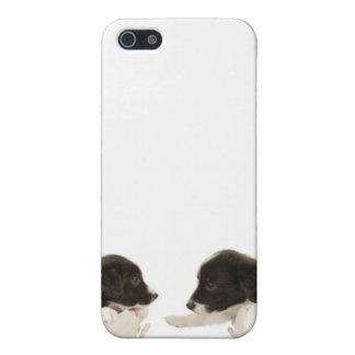 cubierta de los perritos del border collie del iPh iPhone 5 Cobertura