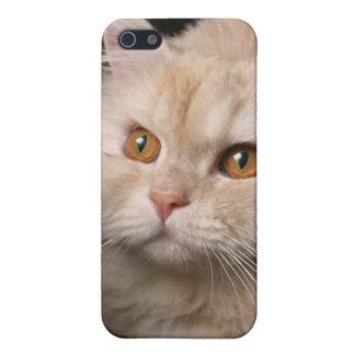 Cubierta de pelo largo rubia o amarilla del gato i iPhone 5 protectores