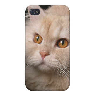 Cubierta de pelo largo rubia o amarilla del gato i iPhone 4 funda