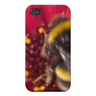 Cubierta del iPhone 4 4S de la abeja del verano iPhone 4 Coberturas