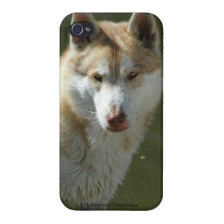 Cubierta del iPhone 4 del lobo iPhone 4 Carcasas