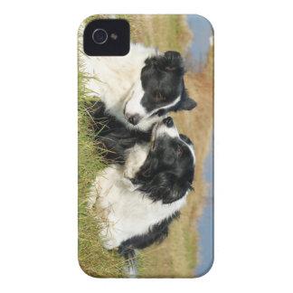 Cubierta del iPhone 4S del border collie Case-Mate iPhone 4 Fundas