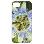Cubierta del iPhone 5 de la flor de la pasión iPhone 5 Carcasas