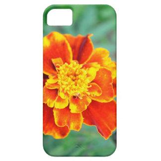 Cubierta del iPhone 5 de la maravilla iPhone 5 Carcasas